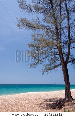 Pine Tree In Beautiful Sea At Phuket , Thailand
