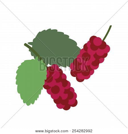 Healthy Organic Red Mulberry, Colorful Tropical Nature Fresh Fruit Objects.