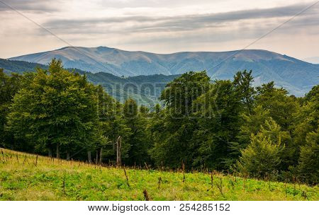 Beech Forest On The Alpine Meadow. Forested Hills And Distant Mountain In Haze. Overcast Summer Weat