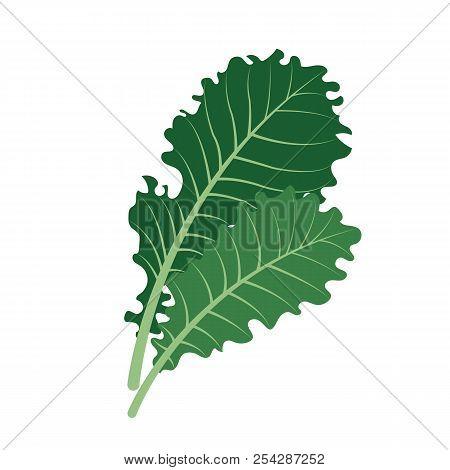 Nature Organic Vegetable Kale, Healthy Vector Colorful Food Vegetable Spice Ingredient.