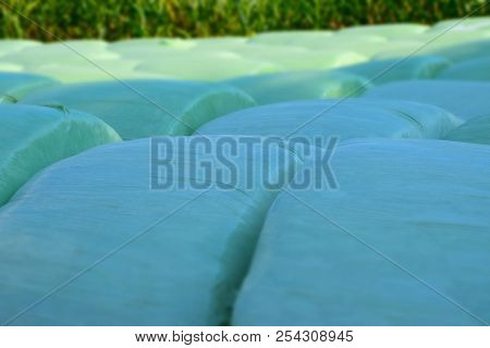 Macro Shot Of Silage Bales In A Row, Rows Of Green Silage Bales In Front Of A Big Cornfield Abstract