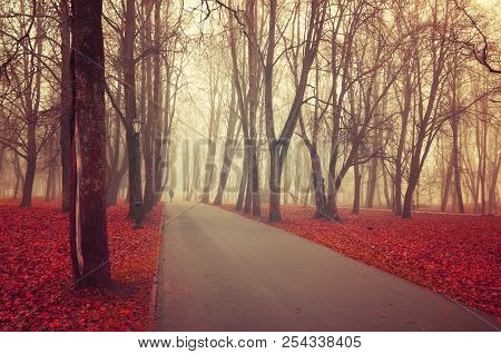 Autumn Landscape. Foggy Autumn Park Alley With Bare Autumn Trees And Dry Red Fallen Autumn Leaves. M