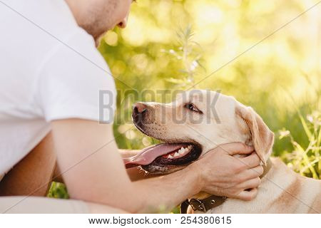 Happy Owner Young Man Caressing Gently Labrador Dog Outdoors In Sunset.