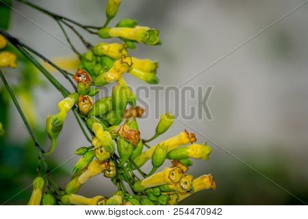 Yellow Flowers On On A Wind