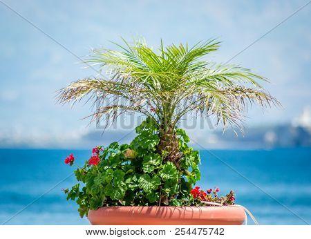 Small Garden In A Harbor