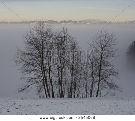 Trees And Alps Above Layer Of Fog
