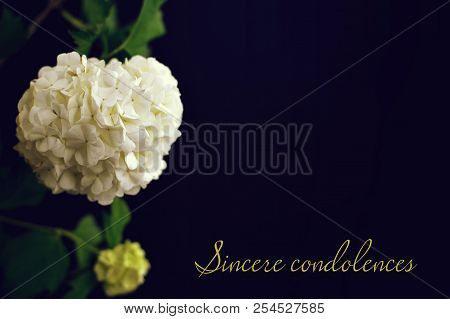 Sincere Condolences Text Written On Condolence Card
