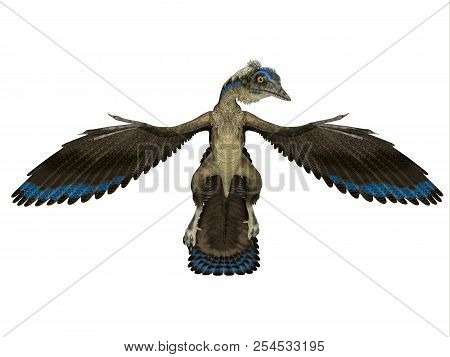 Archaeopteryx Reptile Front 3d Illustration - Archaeopteryx Was A Carnivorous Pterosaur Reptile That