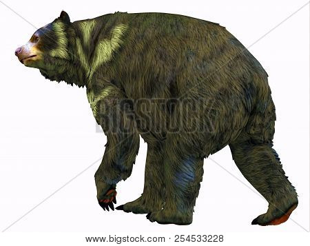 Arctodus Bear Tail 3d Illustration - Arctodus Was An Omnivorous Short-faced Bear That Lived In North