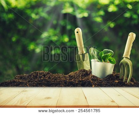 Old Wood Or Flooring And Plant In Garden. Planting A Small Plant On A Pile Of Soil With Gardening To