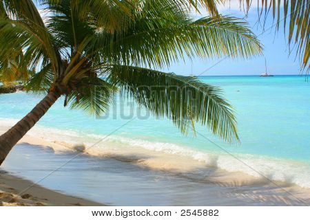 palm tree shading the shore on the Caribbean beach of Seona Island in the Dominican Republic with boat in the background poster