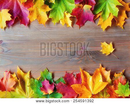 Autumn background. Maple varicolored autumn leaves on the wooden background with free space for text. Autumn border background, autumn composition with colorful maple autumn leaves