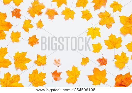 Autumn background. Seasonal autumn maple leaves on the white background. Autumn composition with free space for text, autumn border made of autumn maple leaves