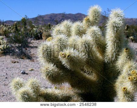 Prickly Desert Cactus