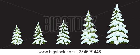 Christmas Tree Set Of Christmas Green Trees. Winter Christmas Tree Holiday Design Elements: Xmas Fir