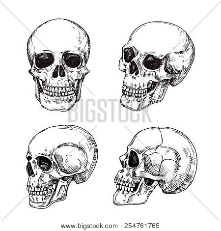 Human Skull. Hand Drawn Skulls. Sketch Vintage Death Tattoo Vector Design Isolated. Skeleton Skull,