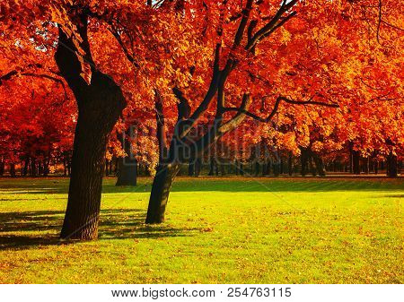 Autumn Trees With Red Foliage In Sunny Autumn September Park Lit By Sunshine. Colorful Autumn Landsc
