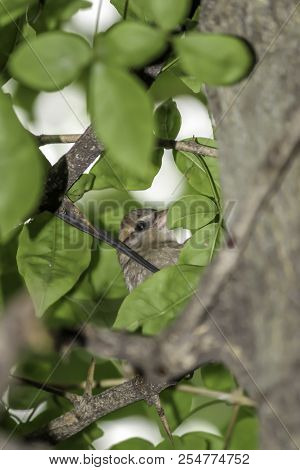Bird Sitting On The Branch In The Forest. Birdwatching In Tropical Mountain Forest.