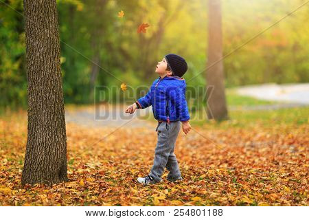 Pretty Boy Gathers A Golden Fall Leaf On Background Of Colorful Autumnal Landscape. Charming Child C