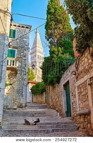 Rovinj (Rovigno), Croatia. Vintage street with traditional Croatian houses and stone stairs leading to tower of Church of Saint Euphemia in the centre of old town. Stray cats sitting on paving stones.