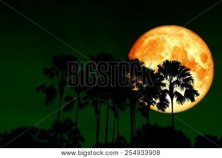 Full Blood Moon Back Over Silhouette High Palms In Night Sky