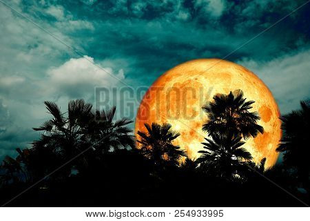 Full Blood Moon Back Silhouette Palm In Dark Night Heap Cloud