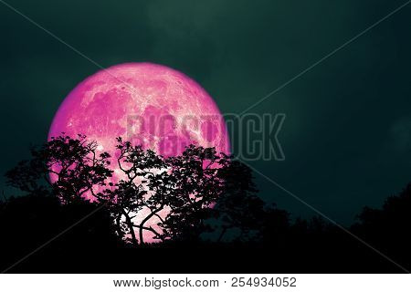Full Pink Moon Back Over Silhouette Leaves On Tree In Night Sky