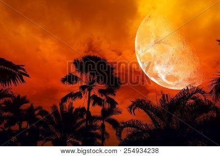 Half Moon Back Silhouette Ancient Tall Palm Tree Night Sky