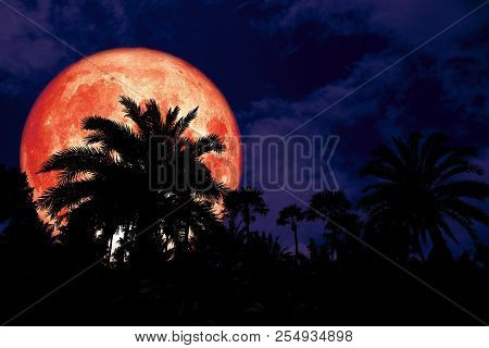 Super Red Blood Moon Back Silhouette In The Ancient Palm Night Sky