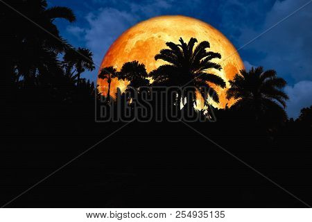 Blood Moon Back Silhouette In The Ancient Park Blue Night Sky