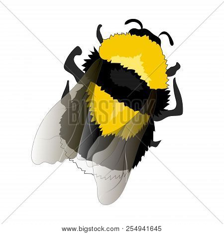 Illustration Of Flying Fat Bumblebee On White Background
