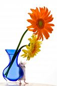 Adorable white pet mouse with tan spots peeking over a blue curvy vase with one yellow and orange gerbera daisy. poster