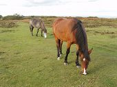 horses grazing on a hill top in early autumn. poster