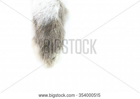 A Real Hare Paw Of Gray-white Color. Talisman For Good Luck. Rabbit Hind Paw On White Isolated Backg