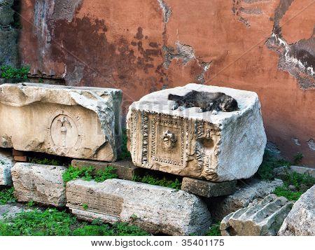 Stray Cat in Rome