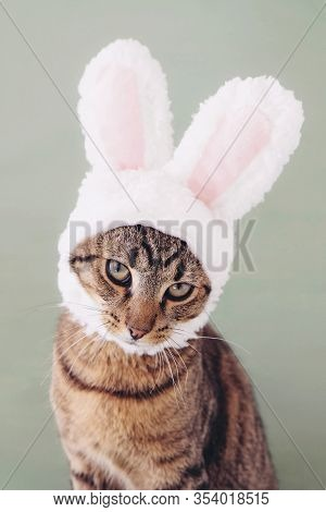 European Shorthair Young Cat Wearing Funny Bunny Ears Against Pastel Green Background.