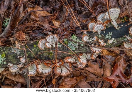 A Rotting Tree Branch With Fungi Lichen And Mosses Laying On The Ground Surrounded By Wet Leaves And