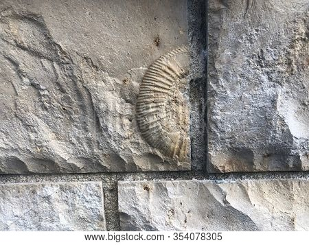 Piece Of Small Ammonite Fossil Embedded In Building Block Made Of Local Limestone Now Built In Wall,