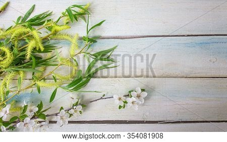 Spring Flower Landscape. Spring Blooming Spring Flowers On An Woodenbackground. White Flowers In The
