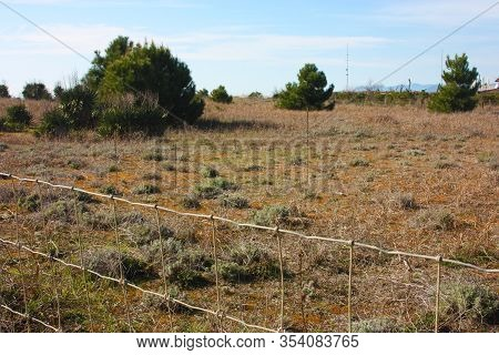 Wild Dunes Covered With Low And Stringy Arid Vegetation Beyond The Network Of The Fenced Park To Pro