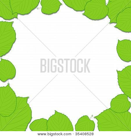 Green leaves frame on the white background dropping shadows
