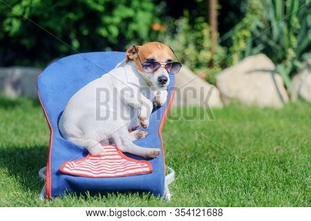 Jack russel terrier dog lies on a deck-chair in sunglasses. Relax and vacation concept