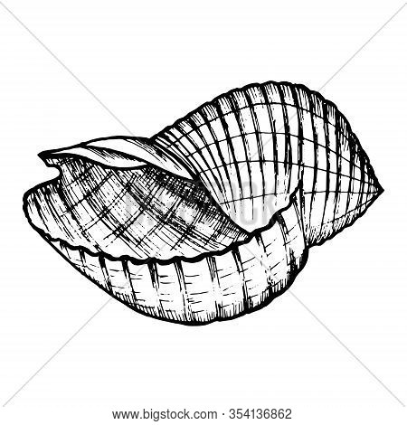 Sea Shell Hand Drawn Doodle Outline. Inhabitant Of The Seabed, Cockleshell For Logo, Icons, Cards, T