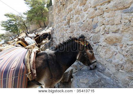 Sheltering Donkey's