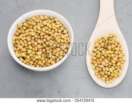 Spice Coriander (coriandrum Sativum) Seeds In Ceramic Bowl And Wooden Spoon On Gray Concrete Backgro