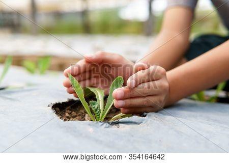 Little Hand Take Care Vegetable On Soil