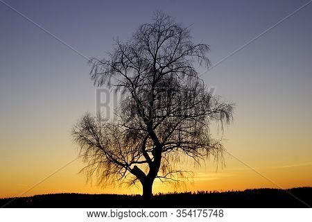 Lonesome Tree In Silhouette In Winter Sunset