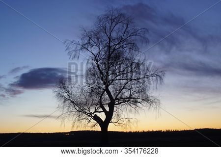 Lonesome Tree In Silhouette Sunset In Winter