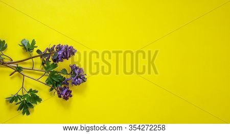 Spring Flower Landscape. In Spring, Blue Flowers Bloom On A Yellow Background. Colorful Flowers In T
