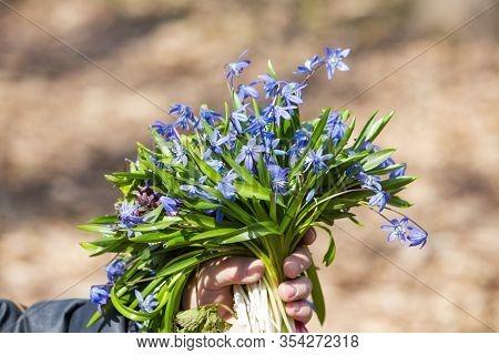 Spring Flower Landscape. In Spring, Blue Flowers Bloom. Colorful Flowers In The Spring. Copyspace